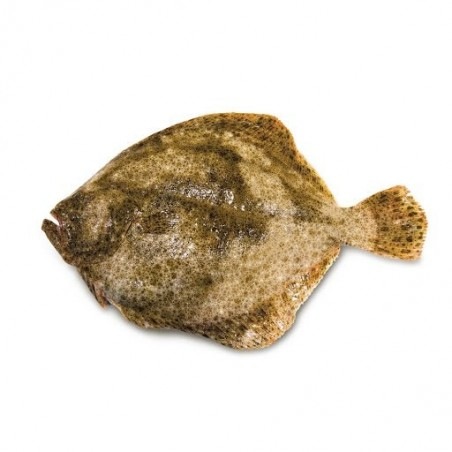 Wild turbot from Galicia -...